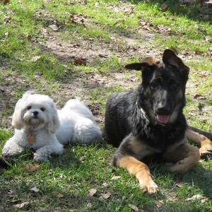 Tillie and Shadow