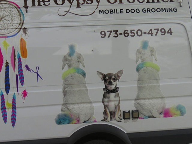The Gypsy Groomer Gets 'Em Clean!